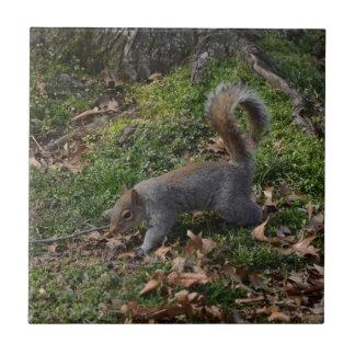 Squirrel On Forest Floor Tile