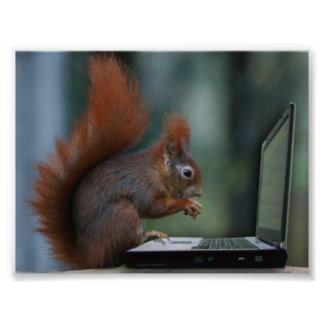 Squirrel on Laptop Poster
