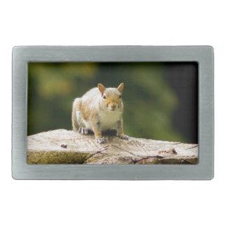 Squirrel on log belt buckle