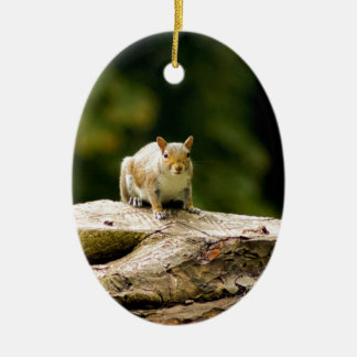 Squirrel on log ceramic oval decoration