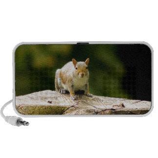 Squirrel on log travelling speakers