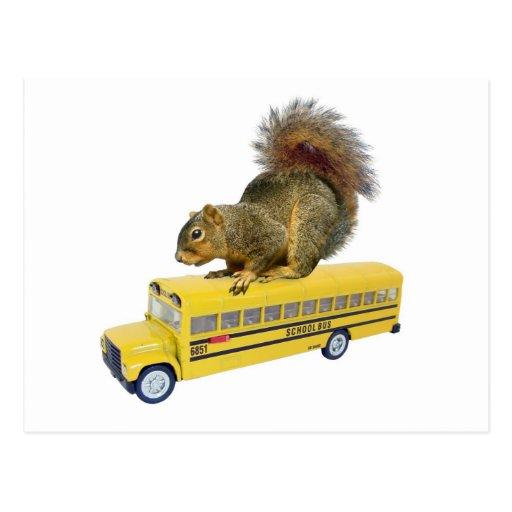 Squirrel on School Bus Post Card