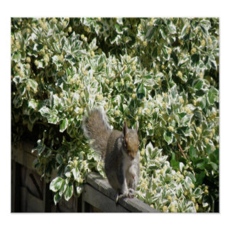 Squirrel on the fence Print