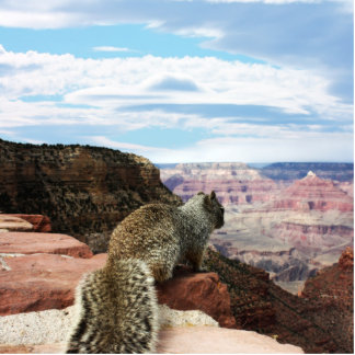 Squirrel Overlooking Grand Canyon, Arizona Cut Out