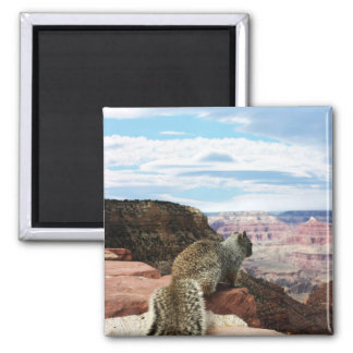 Squirrel Overlooking Grand Canyon, Arizona Square Magnet