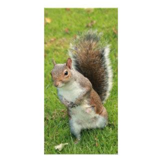 Squirrel Photo Card