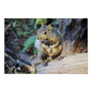 squirrel photography poster