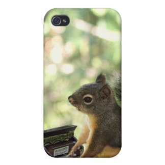 Squirrel Playing Piano Cover For iPhone 4