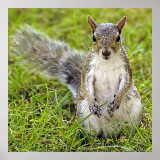 Squirrel Portrait Print
