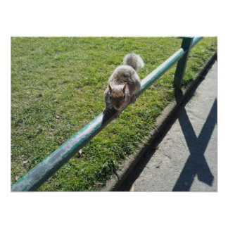 Squirrel Print