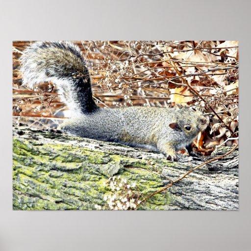 Squirrel! Print