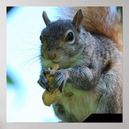 Squirrel Poster Print