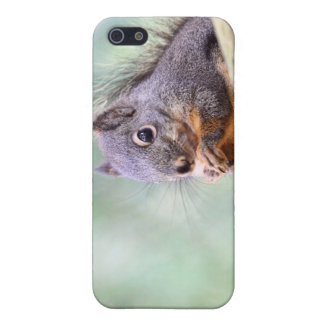 Squirrel Praying for Peanuts iPhone 5 Cover