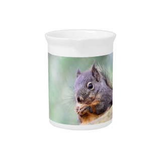 Squirrel Praying for Peanuts Beverage Pitcher