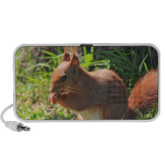 Squirrel red cute photo doodle speakers
