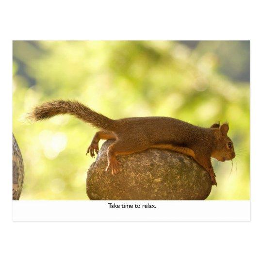 Squirrel Relaxing Postcard