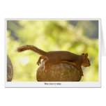 Squirrel Relaxing Stationery Note Card