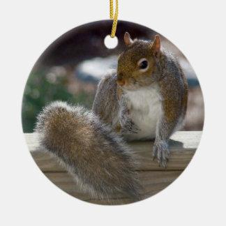 Squirrel Round Ceramic Decoration