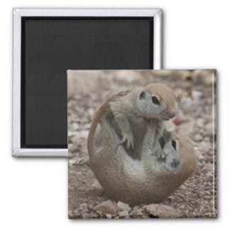 Squirrel Rumble Magnet