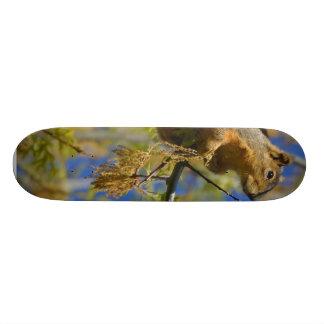 Squirrel Skate Deck
