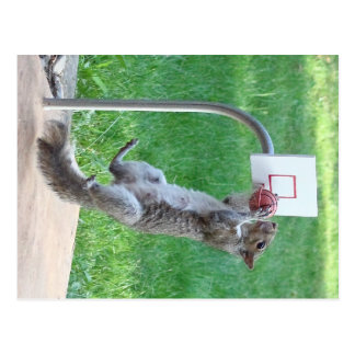 Squirrel Slam Dunk Postcard