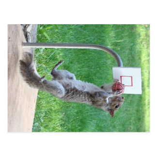 Squirrel Slam Dunk Postcard
