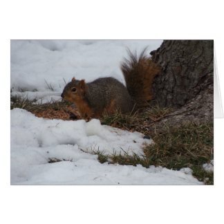 Squirrel & Snow Card