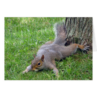 Squirrel Splat Greeting Card