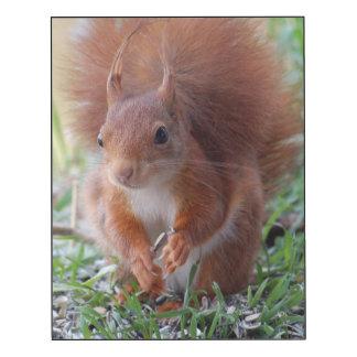 Squirrel squirrel - by Jean Louis Glineur