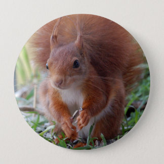 Squirrel squirrel écureuil 10 cm round badge