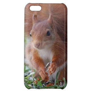 Squirrel squirrel Écureuil iPhone 5C Case