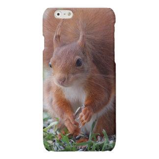 Squirrel Squirrel Écureuil iPhone 6 Plus Case