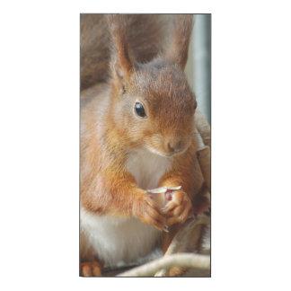 Squirrel Squirrel Écureuil - photo: JL Glineur