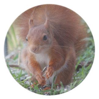 Squirrel Squirrel Écureuil Plate