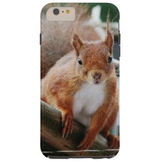 Squirrel Squirrel Écureuil Tough iPhone 6 Plus Case