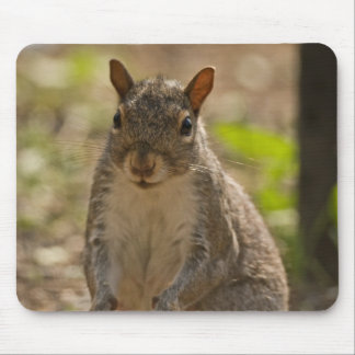 Squirrel Standing Mouse Pad