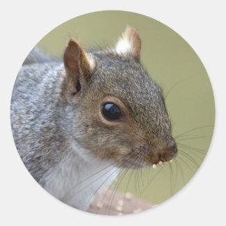 Squirrel Stickers