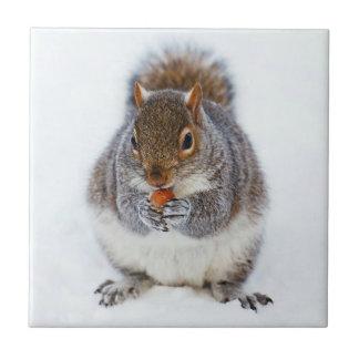 Squirrel Tile