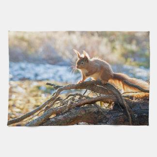 Squirrel towel