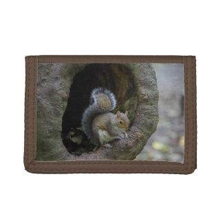 Squirrel Wallet