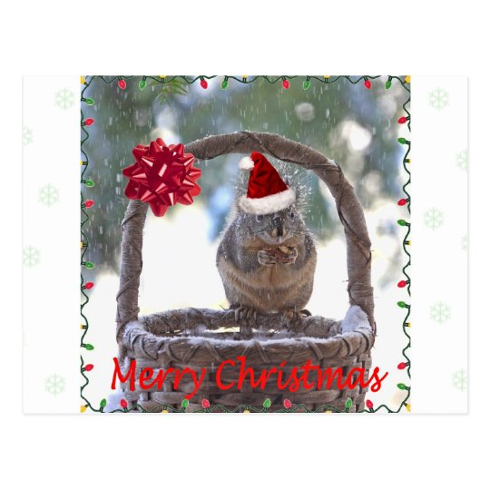 Squirrel Wearing Santa Hat Postcard