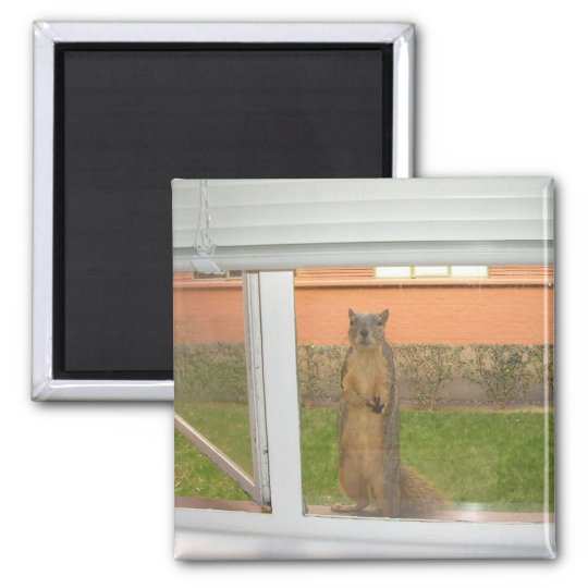 Squirrel Window magnet