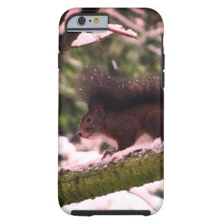 Squirrel Winter Photo iPhone 6/6s, Tough Tough iPhone 6 Case