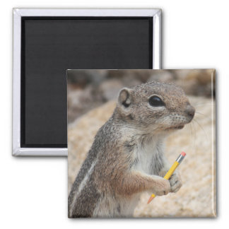 Squirrel With a Pencil Magnet