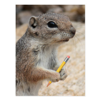 Squirrel With a Pencil Post Card