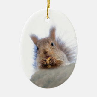 Squirrel with a walnut ceramic oval decoration