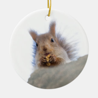 Squirrel with a walnut christmas ornament