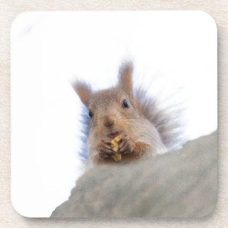 Squirrel with a walnut drink coaster