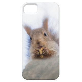 Squirrel with a walnut iPhone 5 cases