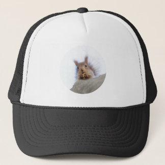 Squirrel with a walnut trucker hat